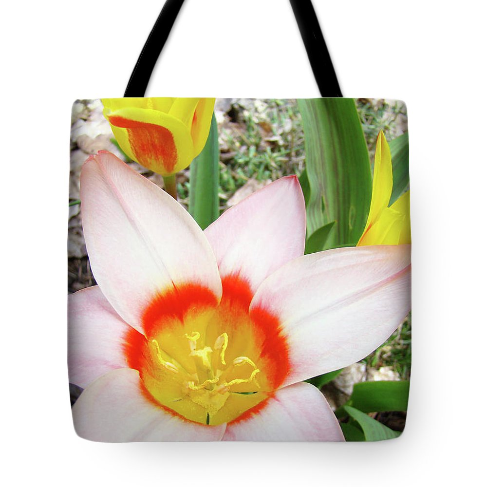 �tulips Artwork� Tote Bag featuring the photograph Tulips Artwork 9 Spring Floral Pink Tulip Flowers Art Prints by Baslee Troutman