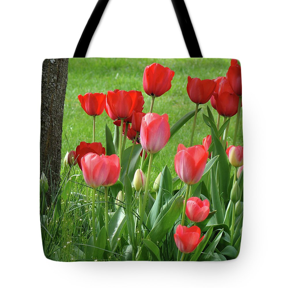 �tulips Artwork� Tote Bag featuring the photograph Tulips Flowers Art Prints Spring Tulip Flower Artwork Nature Art by Baslee Troutman