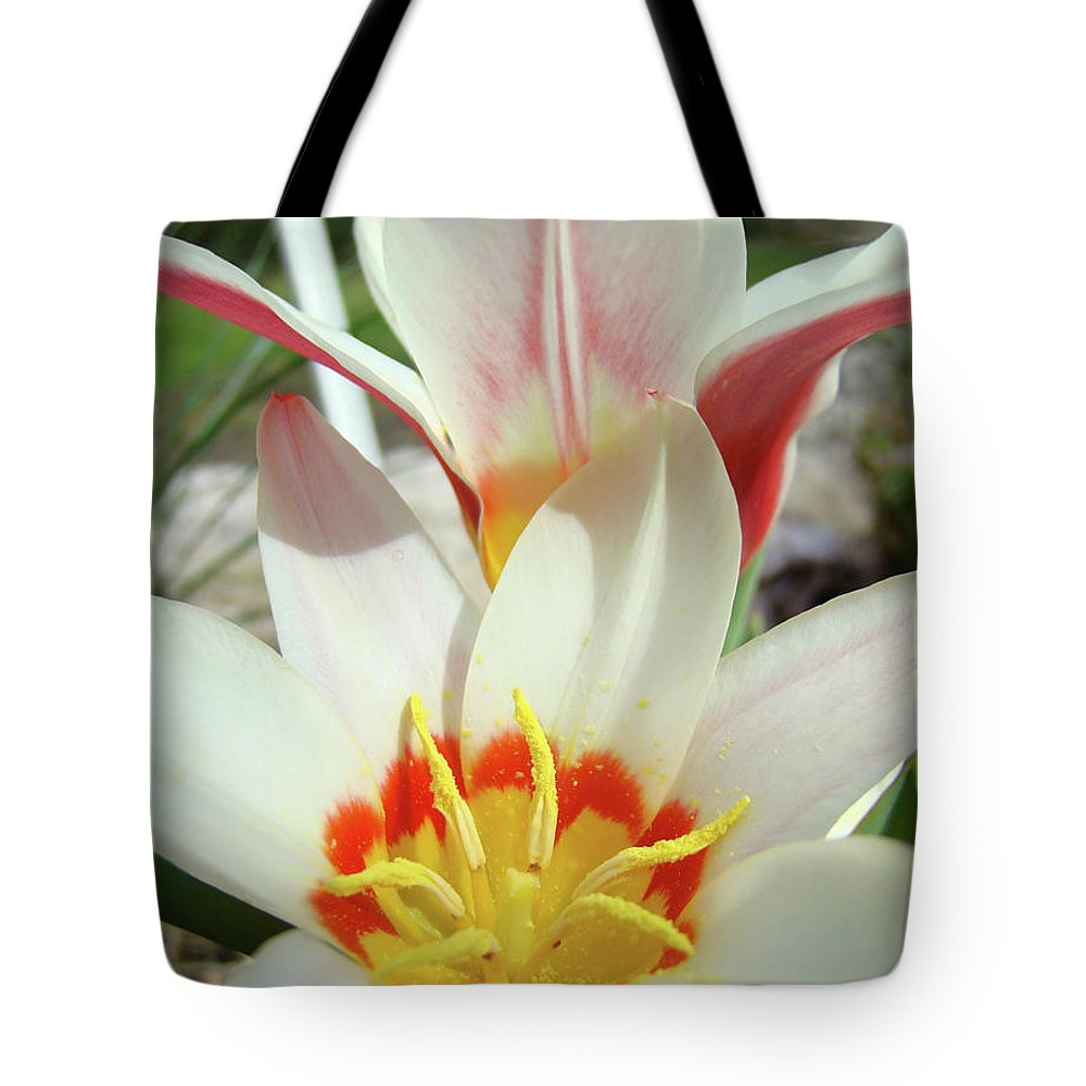 �tulips Artwork� Tote Bag featuring the photograph Tulips Flowers Artwork 1 Tulip Flower Art Prints Spring Floral Art White Tulips Garden by Baslee Troutman
