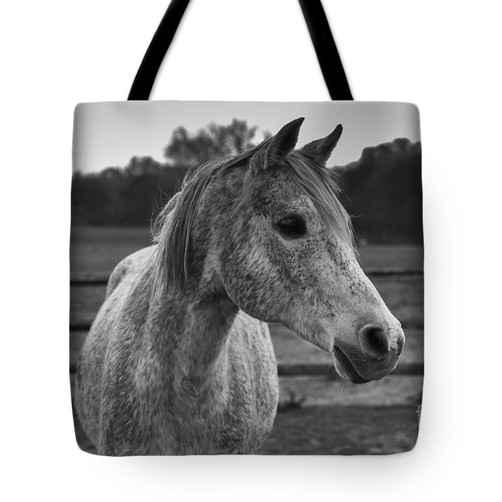 Horse Tote Bag featuring the photograph Turbo by David Rucker