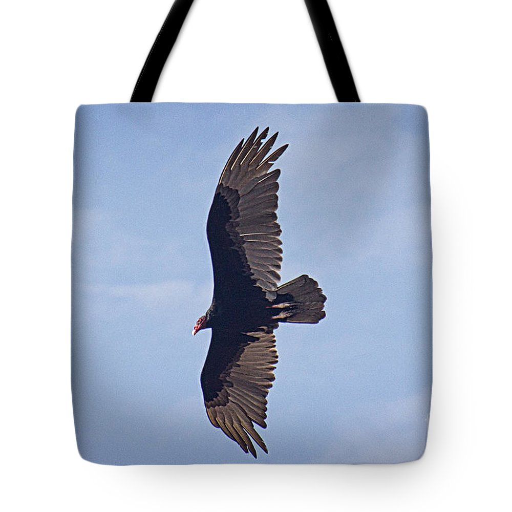Turkey Vulture Tote Bag featuring the photograph Turkey Vulture by Bob Hislop