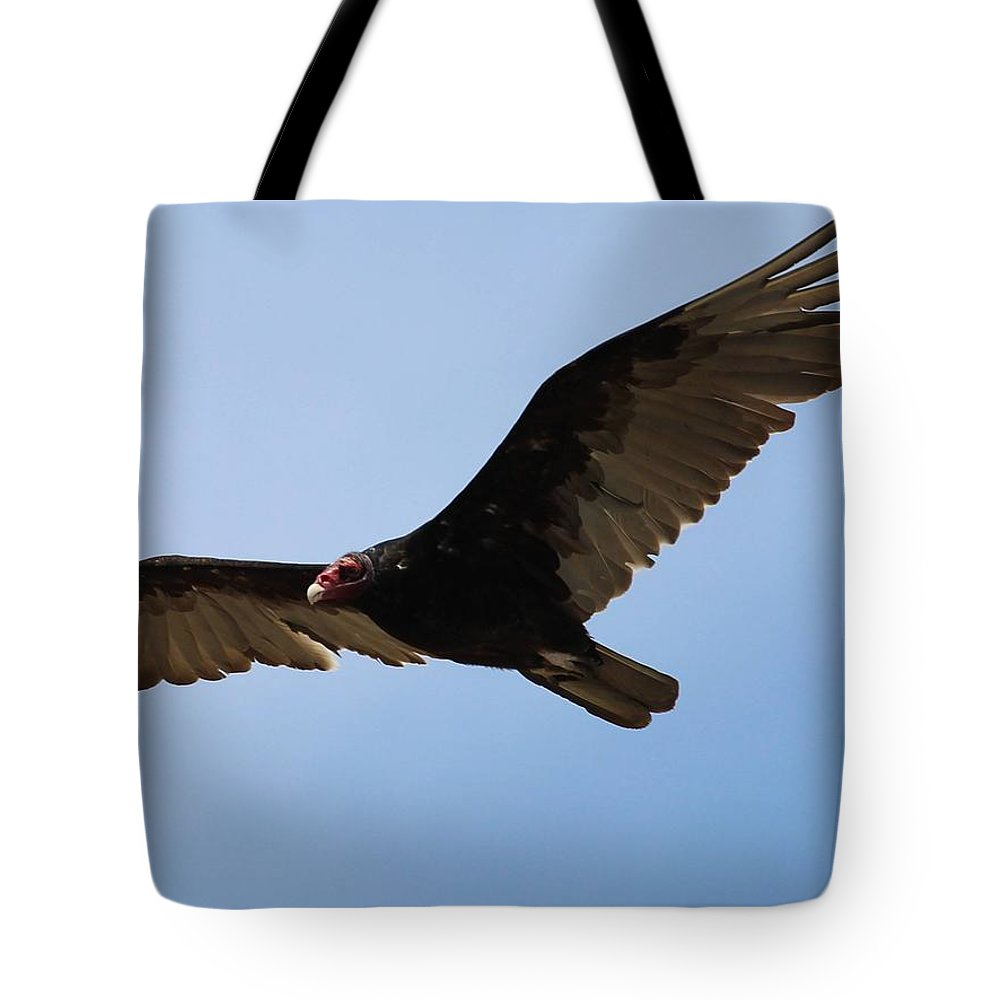Photographs Tote Bag featuring the photograph Turkey Vulture Soaring by Gary Canant