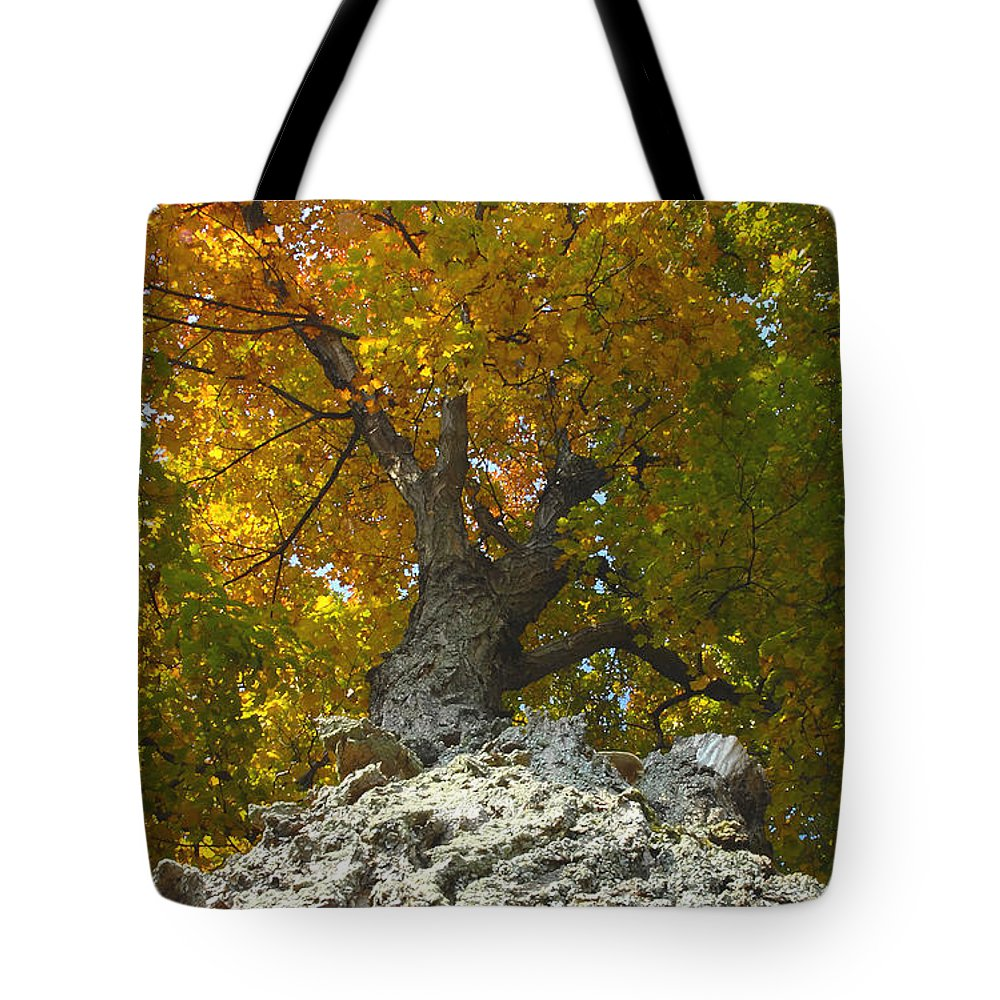 Fall Tote Bag featuring the photograph Turning Colors by David Lee Thompson