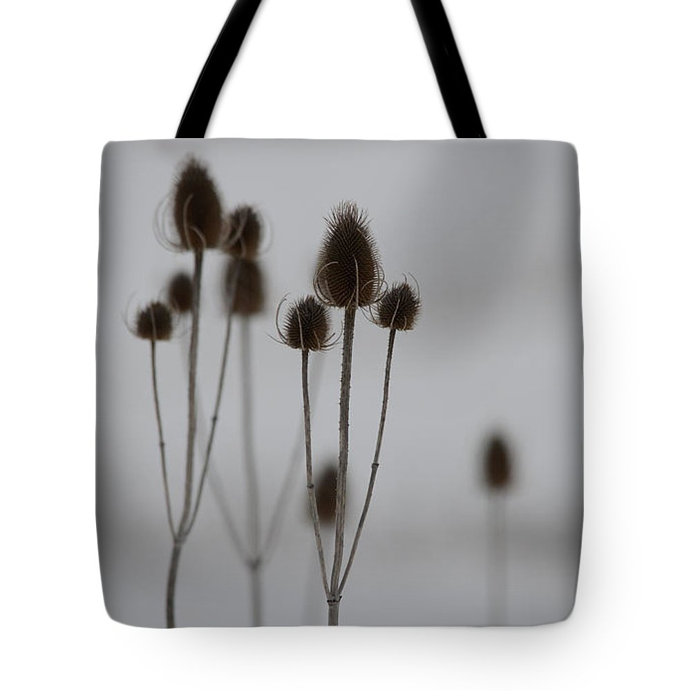 Teasels Tote Bag featuring the photograph Teasels by Whispering Peaks Photography
