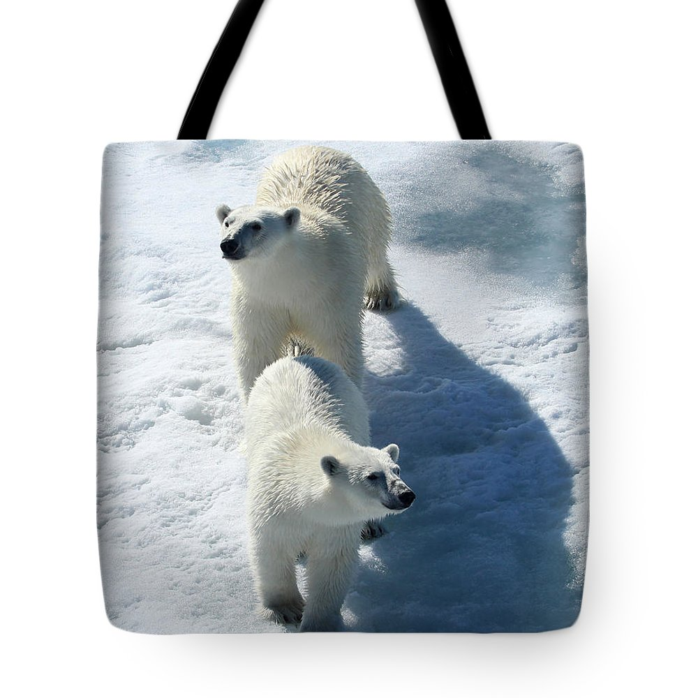 Arctic Polar Bear Cubs Twins Ice Animals Endangered Cold Snow Bears Mother Curious Double Frozen Tote Bag featuring the photograph Twins by Jacob Schran