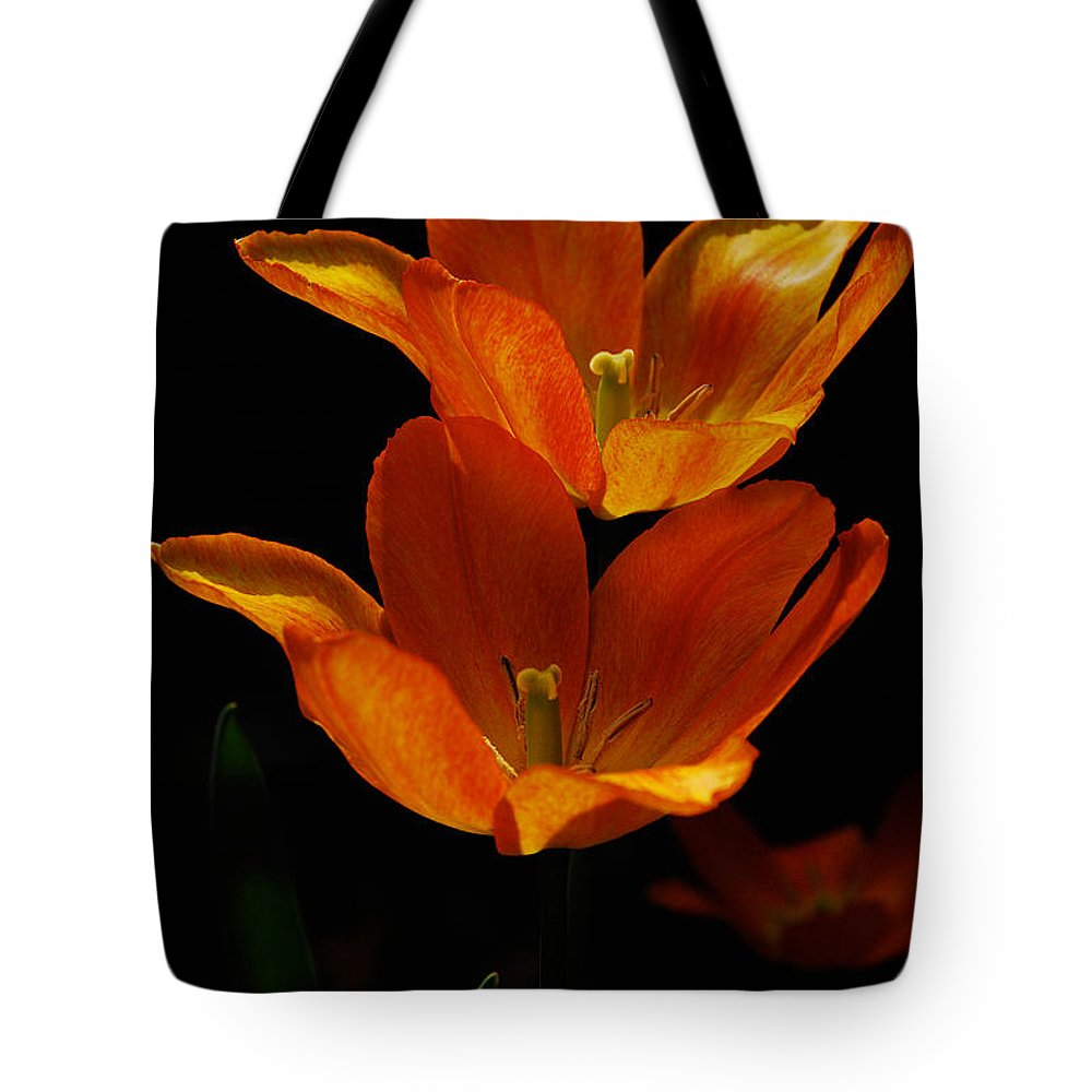 Lois Bryan Tote Bag featuring the photograph Twins by Lois Bryan