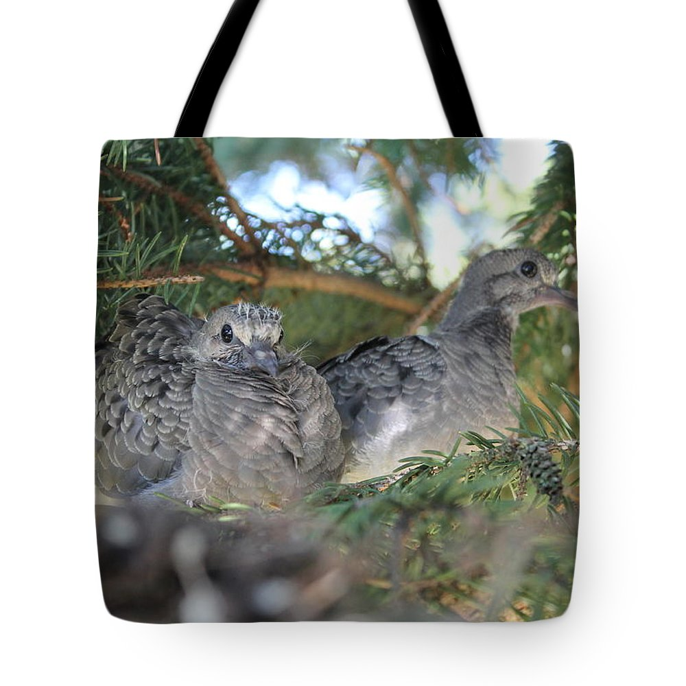 Birds Tote Bag featuring the photograph Two Baby Morning Dove's by Dennis Pintoski
