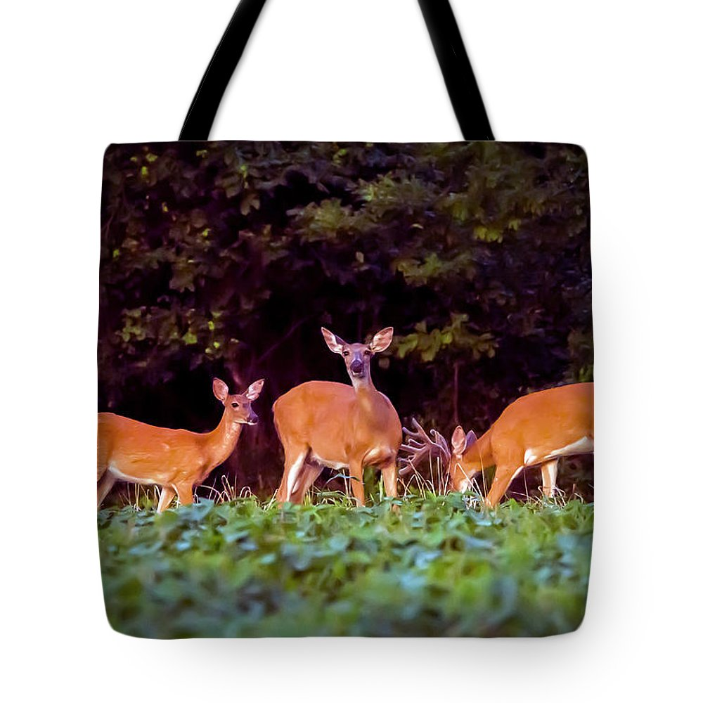 2d Tote Bag featuring the photograph Two Doe And One Buck by Brian Wallace