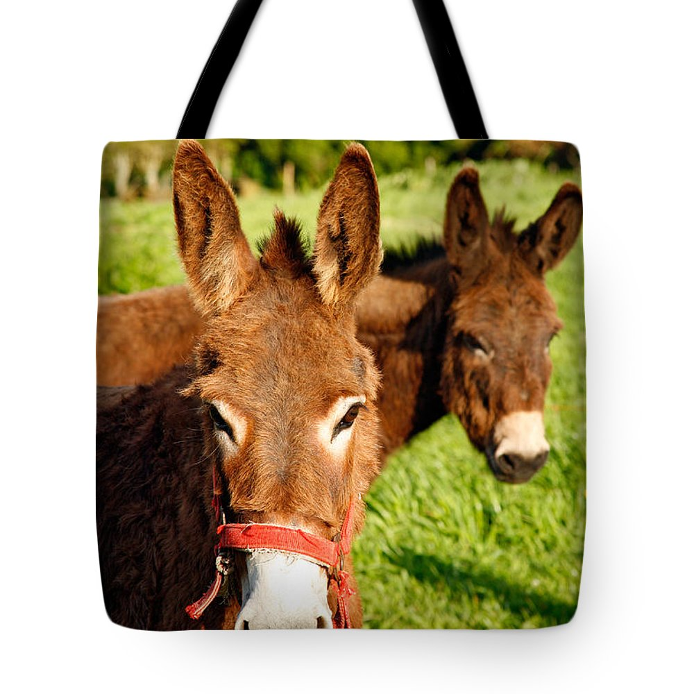 Animals Tote Bag featuring the photograph Two Donkeys by Gaspar Avila