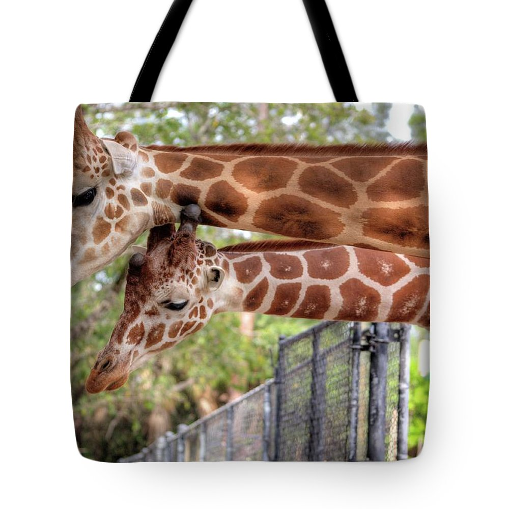 Giraffe Tote Bag featuring the photograph Two Giraffes by Jim Allsopp