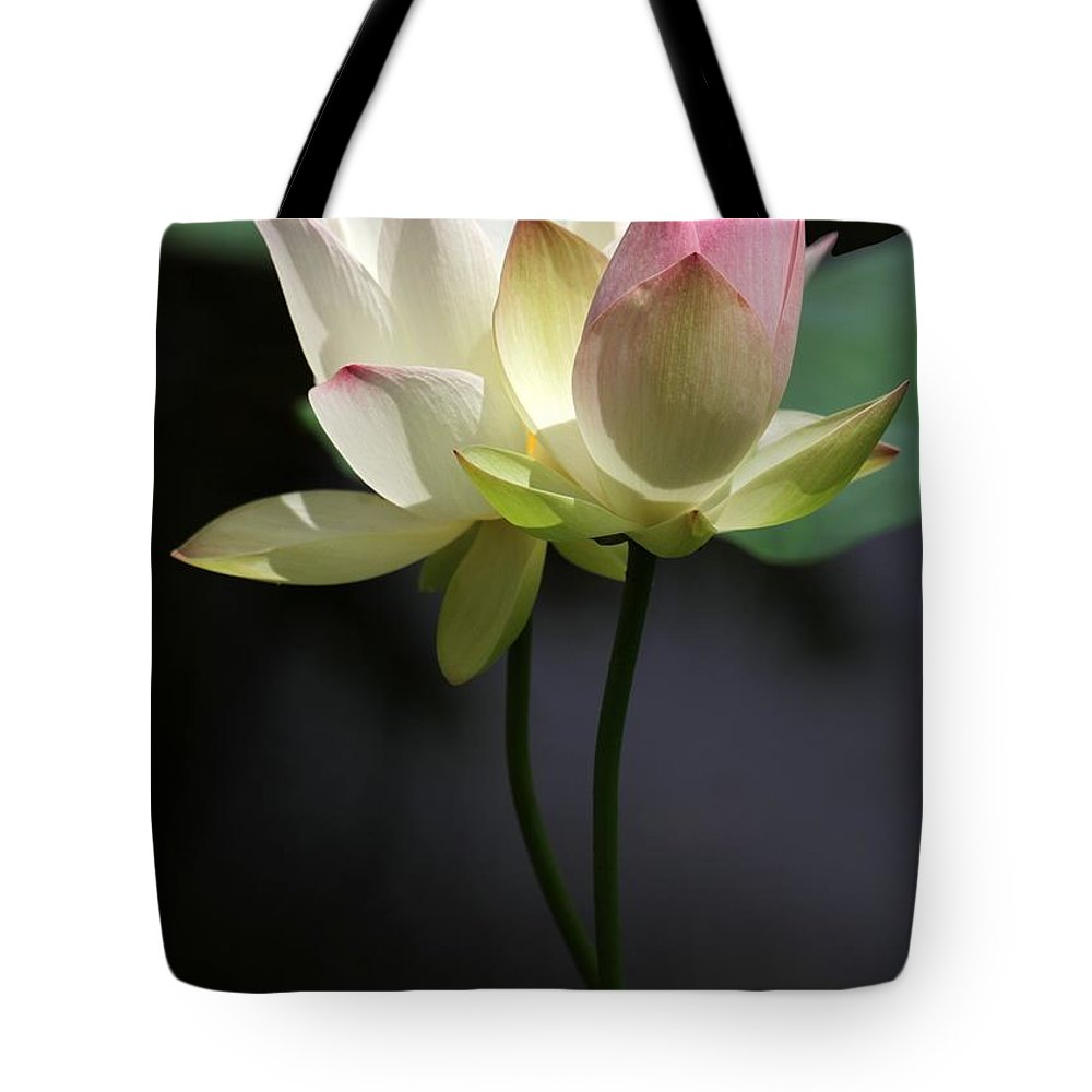 Two lotus flowers tote bag for sale by sabrina l ryan lotus tote bag featuring the photograph two lotus flowers by sabrina l ryan izmirmasajfo