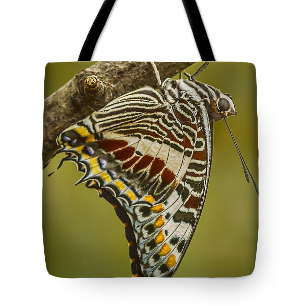 Butterfly Tote Bag featuring the photograph Two Tailed Pasha Butterfly by Lindley Johnson