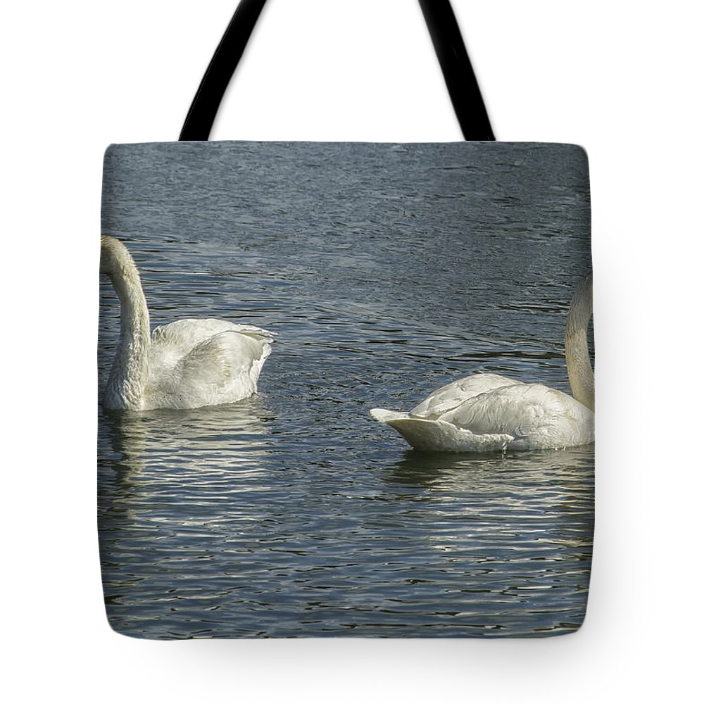 Trumpeter Swan Tote Bag featuring the photograph Two Trumpeter Swans At Oxbow Bend by Belinda Greb