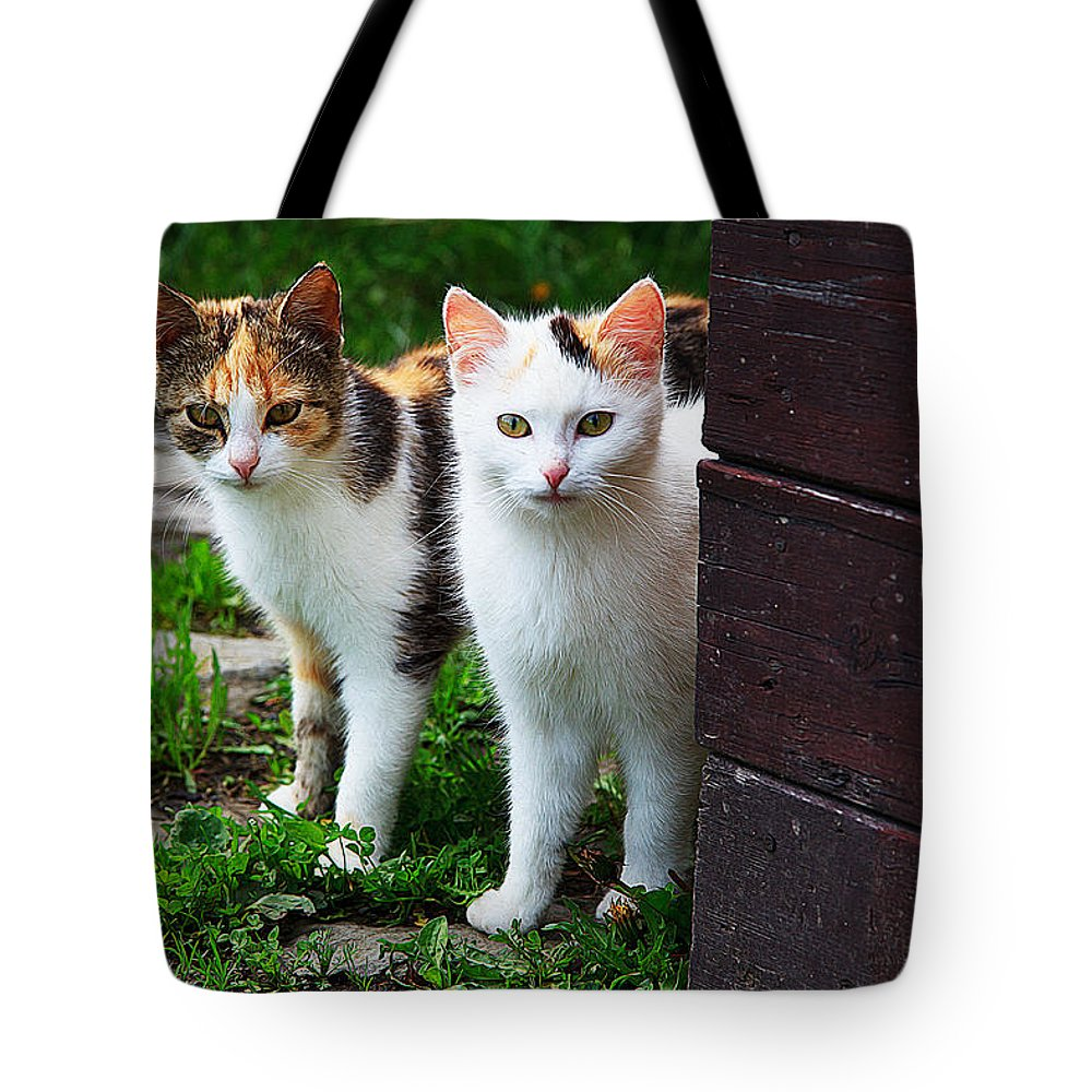 Cat Art Tote Bag featuring the painting Two Young Cats by Queso Espinosa