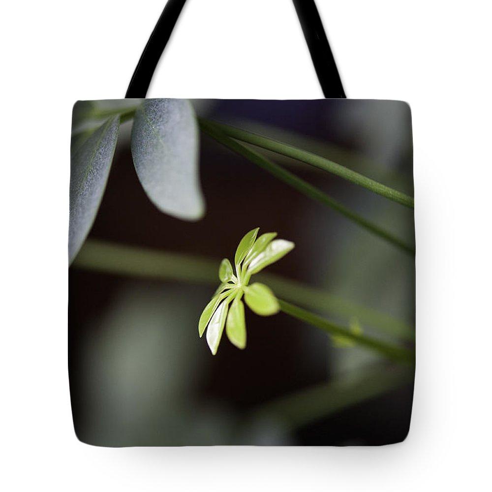 Umbrella Tote Bag featuring the photograph Umbrella Plant by Steven Dunn