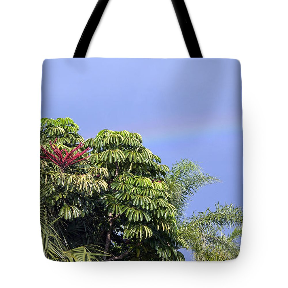 Rainbow Tote Bag featuring the photograph Umbrella Tree With Rainbow And Flower by Allan Hughes