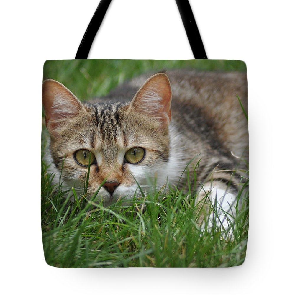 Cat Tote Bag featuring the photograph Un Chat Ecolo by Kris Woo