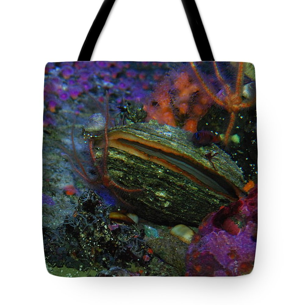 Clam Tote Bag featuring the photograph Undersea Clam by AJ Harlan