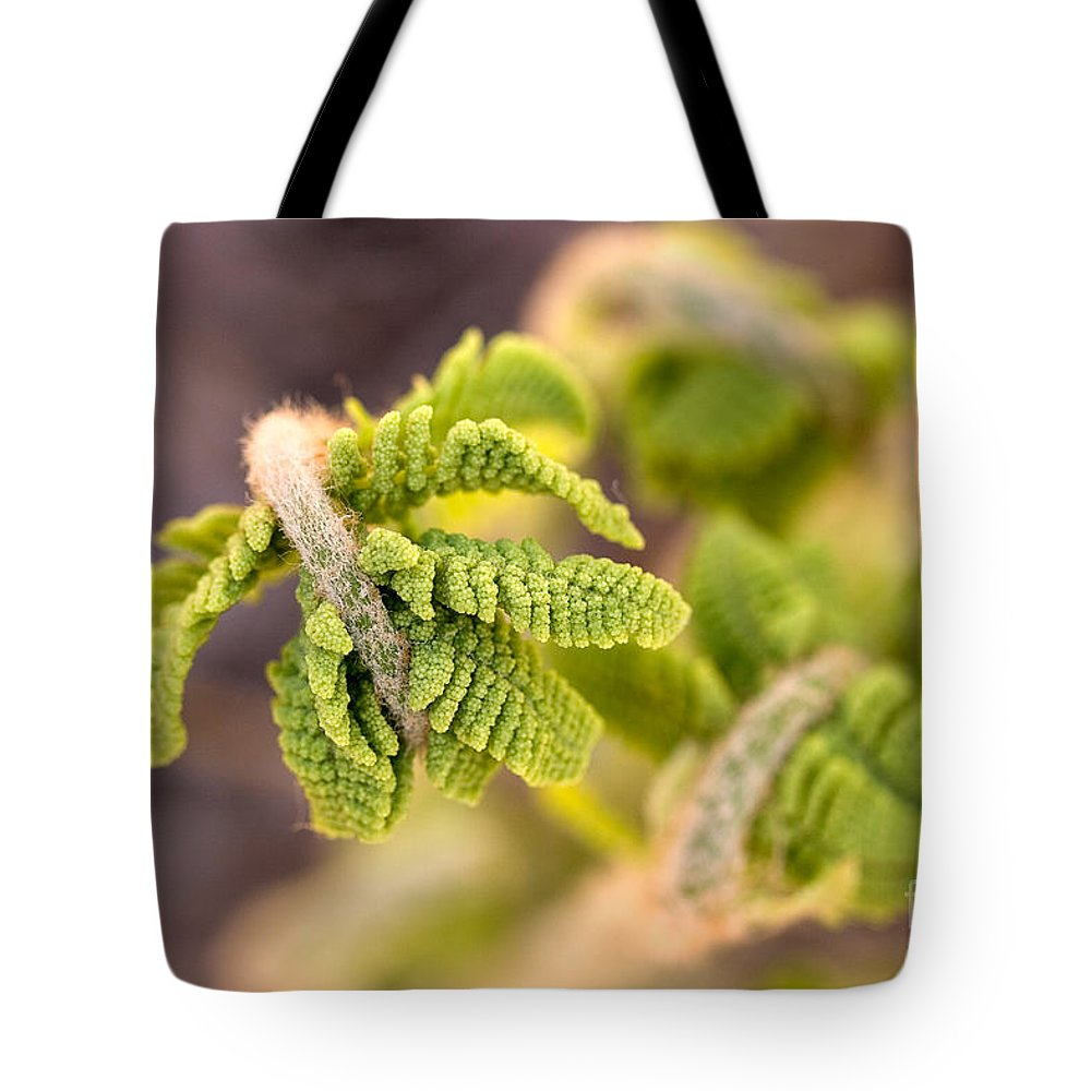 Nature Tote Bag featuring the photograph Unfolding Fern Leaf by Louise Heusinkveld