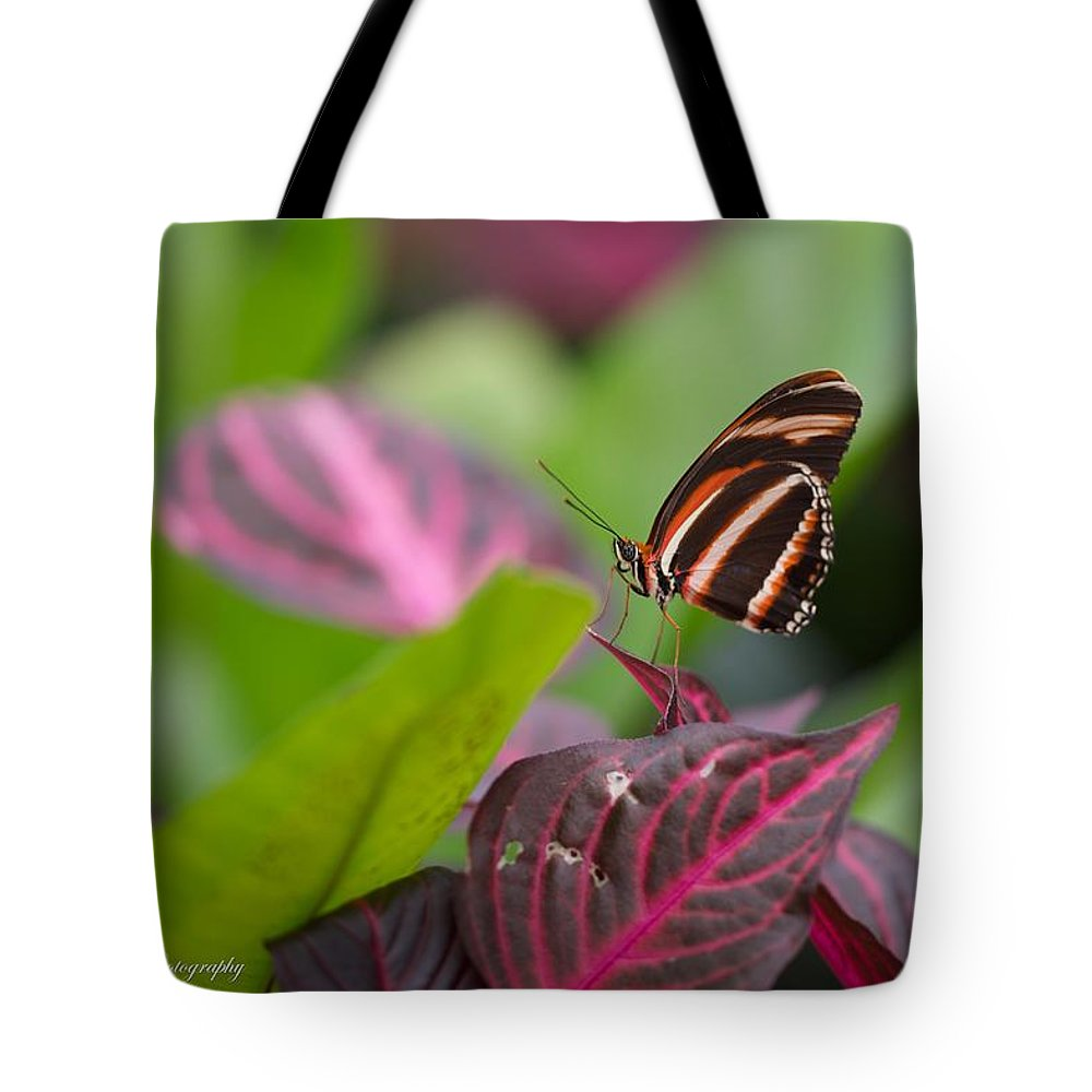 Butterfly Tote Bag featuring the photograph Untitled by Constance Sanders