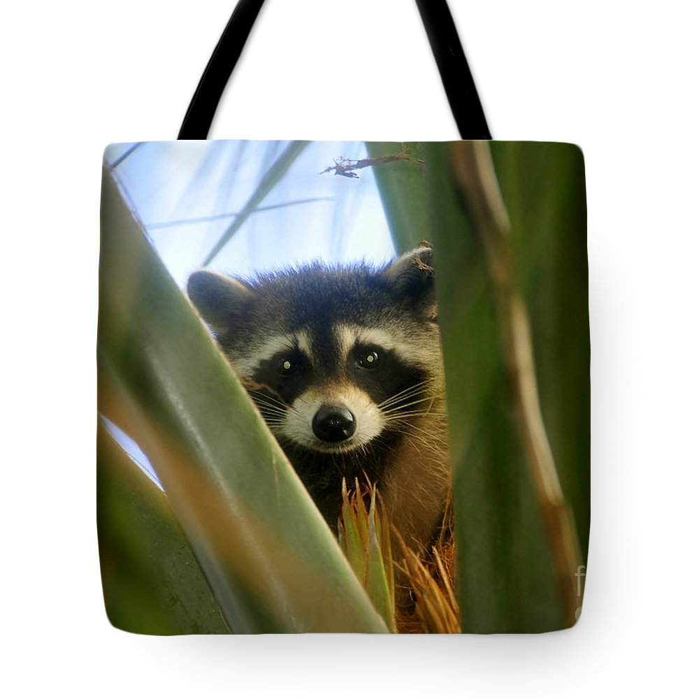 Raccoon Tote Bag featuring the photograph Up A Tree by David Lee Thompson