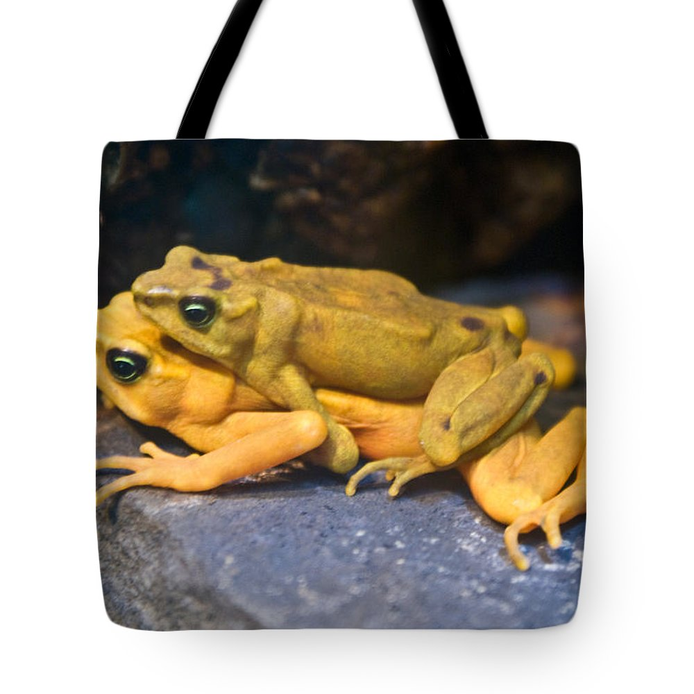 Frogs Tote Bag featuring the photograph Up Close And Personal by Douglas Barnett