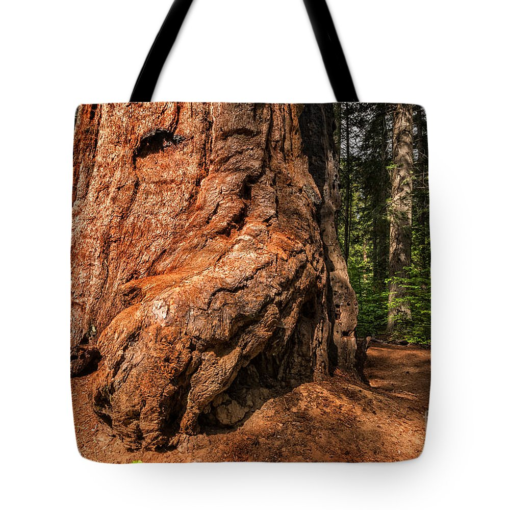 Tree Tote Bag featuring the photograph Up Close To A Giant by Dianne Phelps