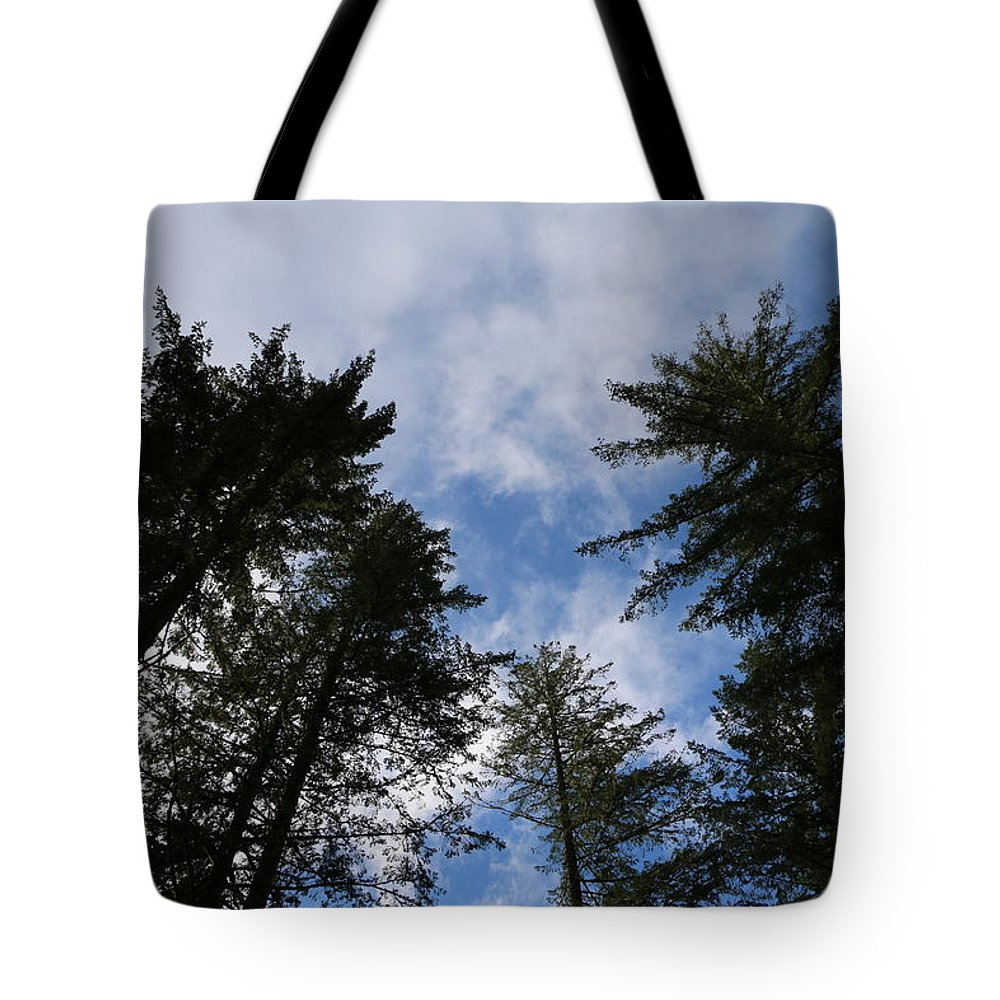 Trees Tote Bag featuring the photograph Up by Dani Keating