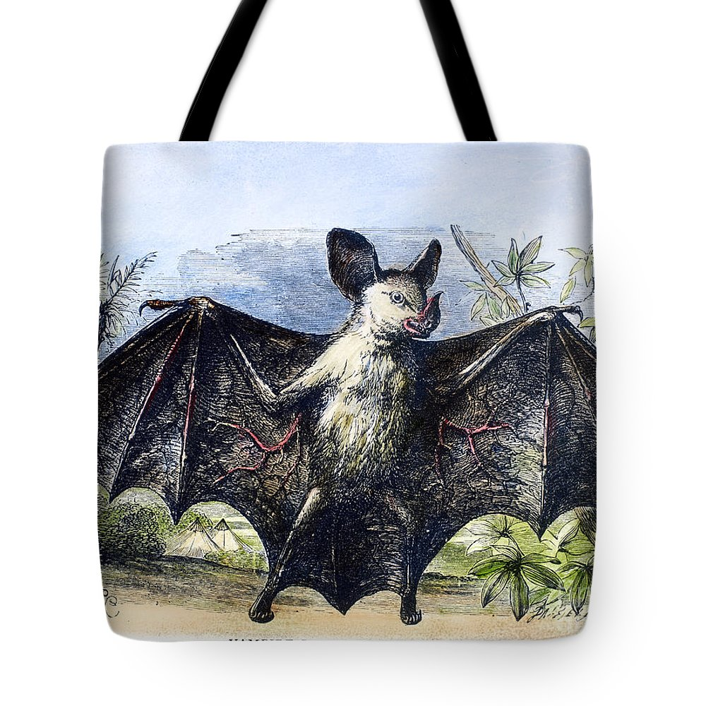 19th Century Tote Bag featuring the photograph Vampire Bat by Granger