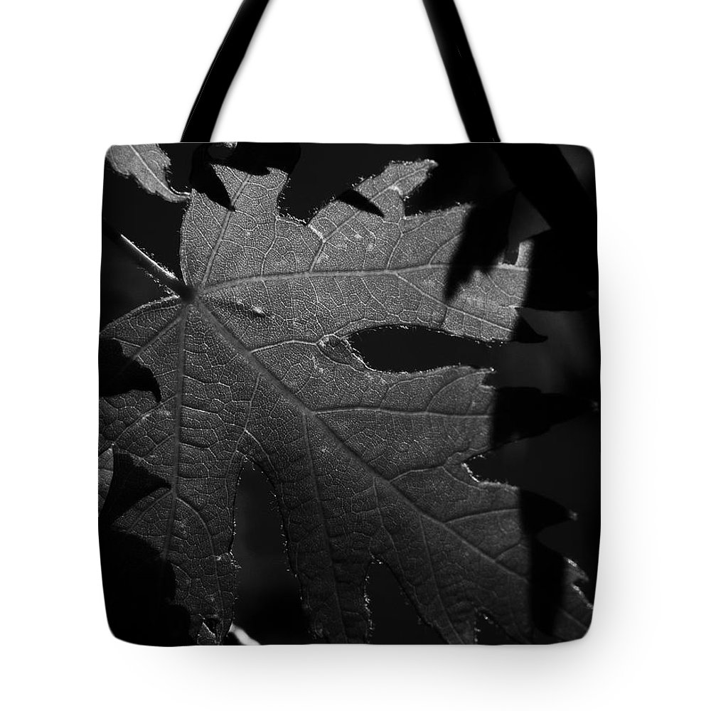 Maple Tote Bag featuring the photograph Veins Of A Maple by Derek Palmer