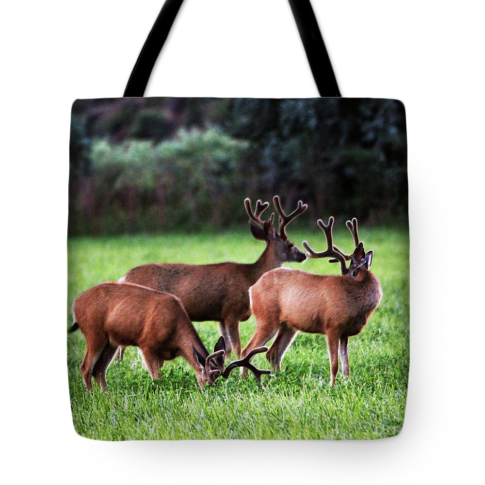Wildlife Tote Bag featuring the photograph Velvet Antlers In The Sunset by Dale E Jackson