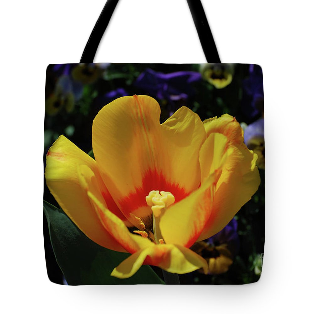 Tulip Tote Bag featuring the photograph Very Pretty Flowering Yellow Tulip With A Red Center by DejaVu Designs