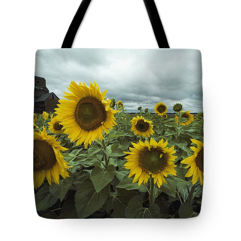 North Dakota Tote Bag featuring the photograph View Of A Field Of Sunflowers by Annie Griffiths