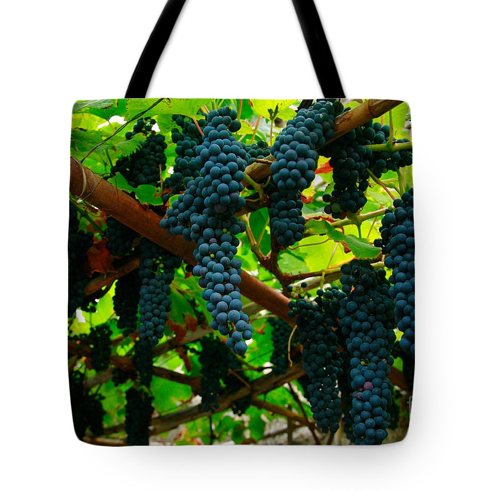 Countryside Tote Bag featuring the photograph Vines by Gaspar Avila