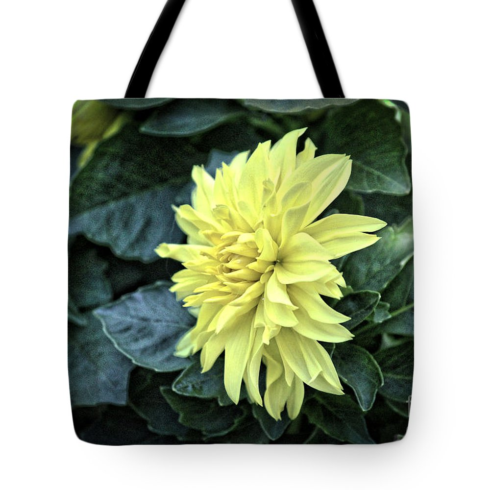 Dahlia Tote Bag featuring the photograph Vintage Dahlia by Karin Everhart
