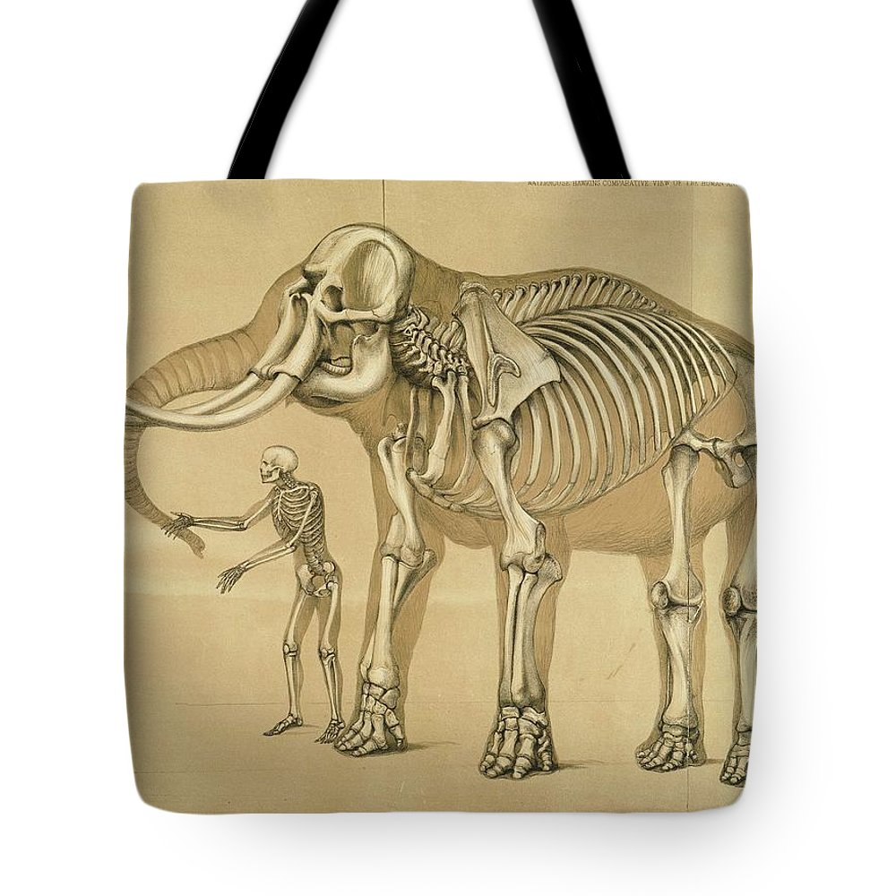 Vintage Elephant And Human Skeleton Illustration Tote Bag