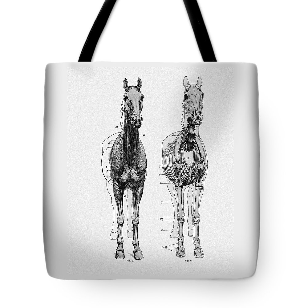 Vintage Horse Anatomy Scientific Illustration Tote Bag For Sale By