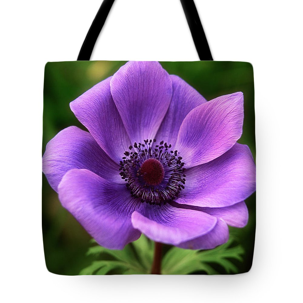 Flower Tote Bag featuring the photograph Violet Anemone by Jim Benest