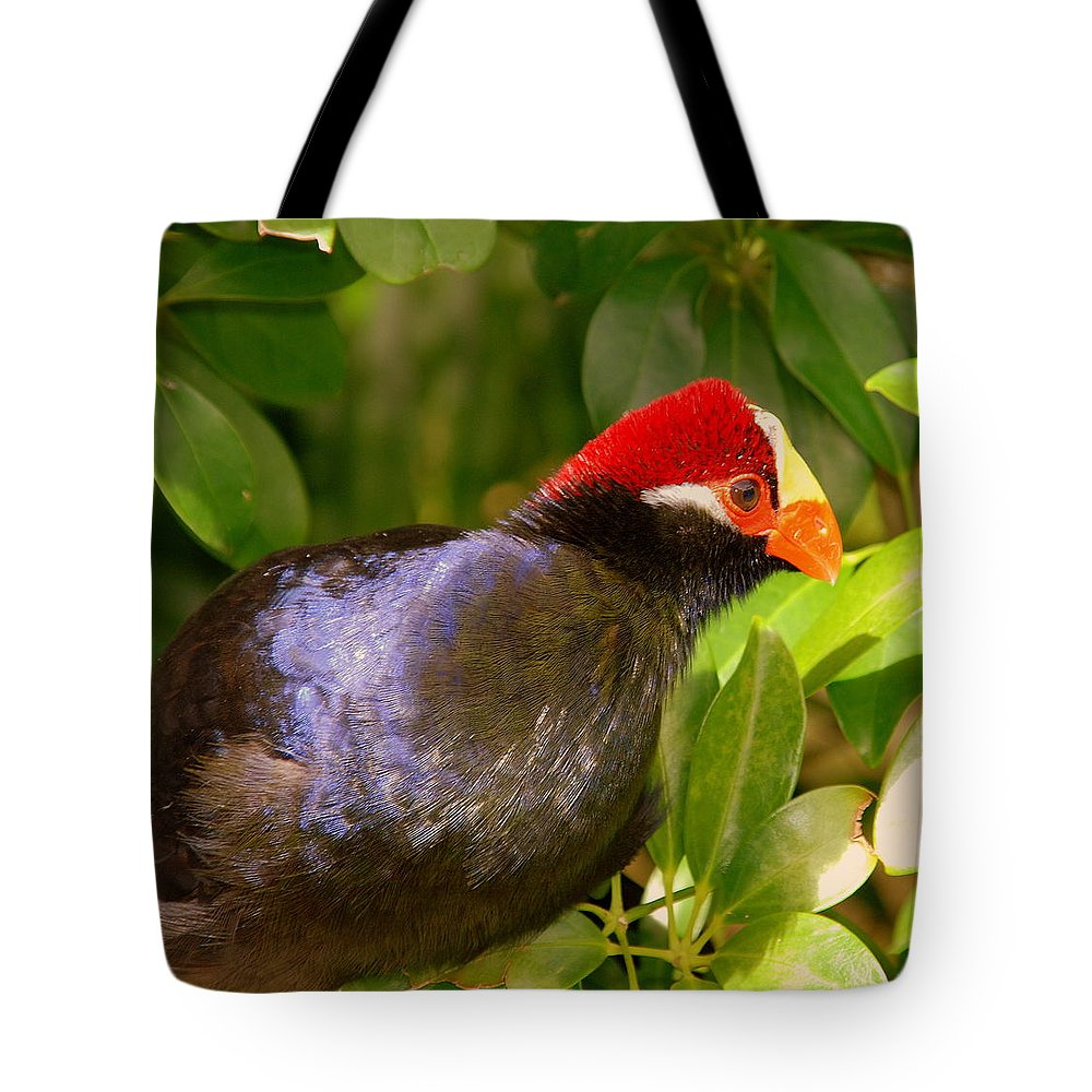 Violet Plantain Eater Tote Bag featuring the photograph Violet Plantain Eater by Susanne Van Hulst