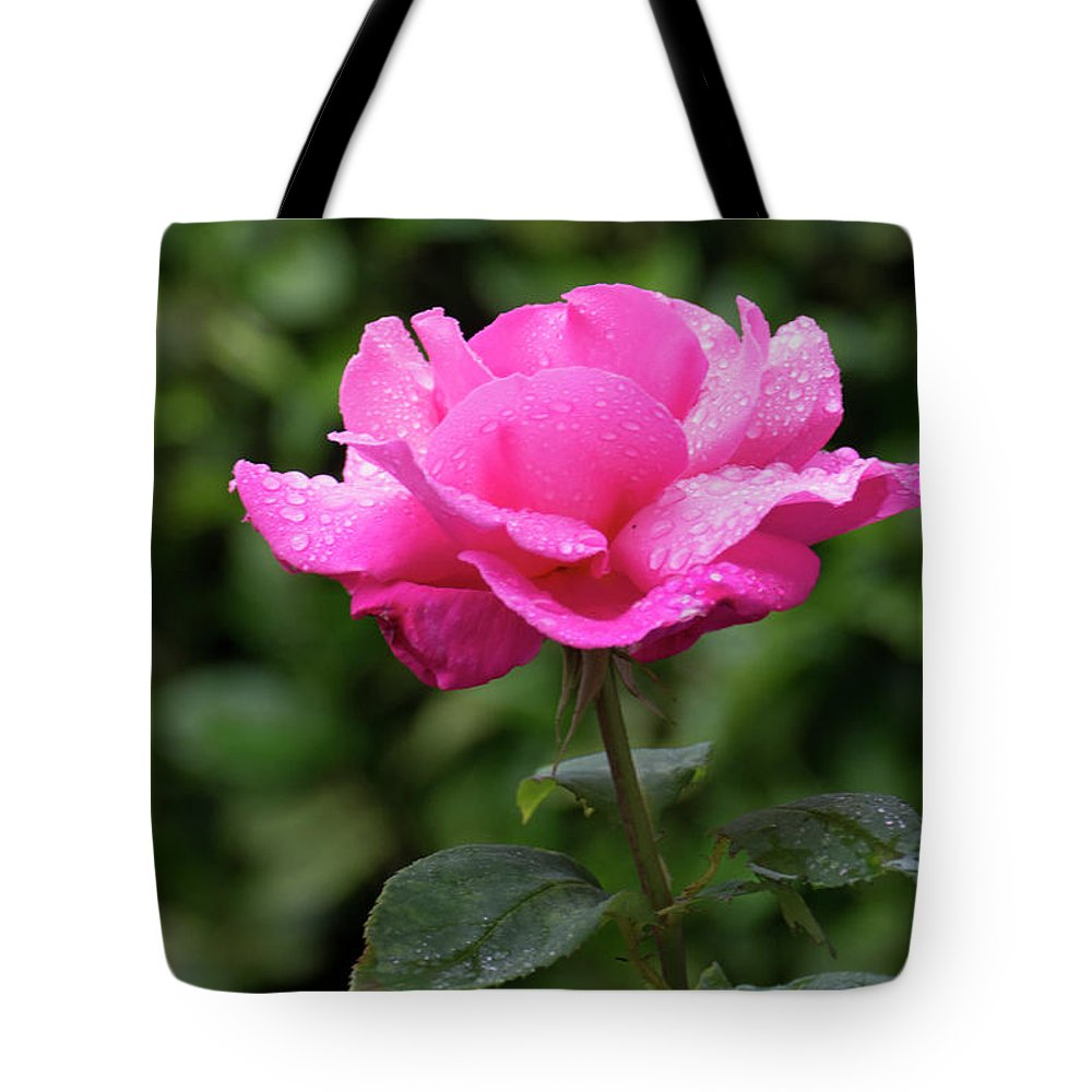 Bloom Tote Bag featuring the photograph Vivid Pink Rose by Philip Enticknap