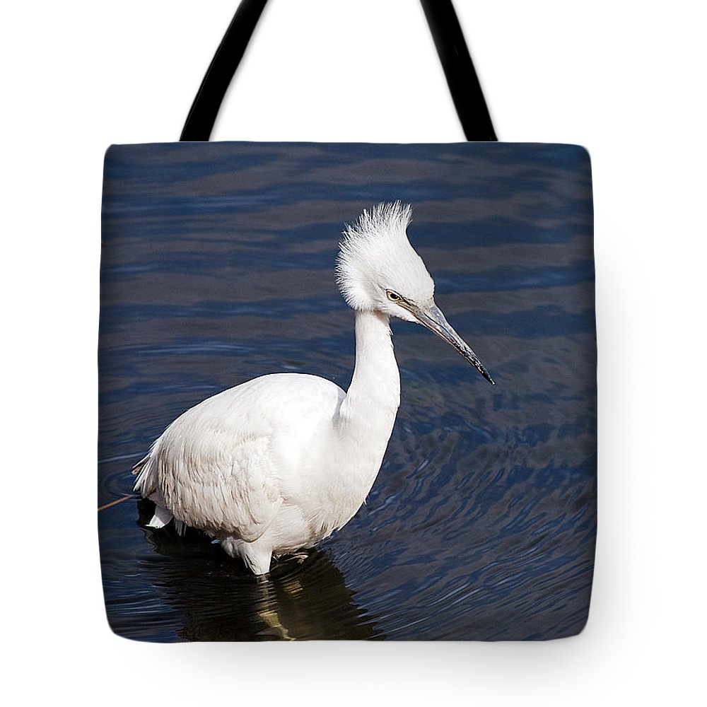 Nature Tote Bag featuring the photograph Wading by Kenneth Albin