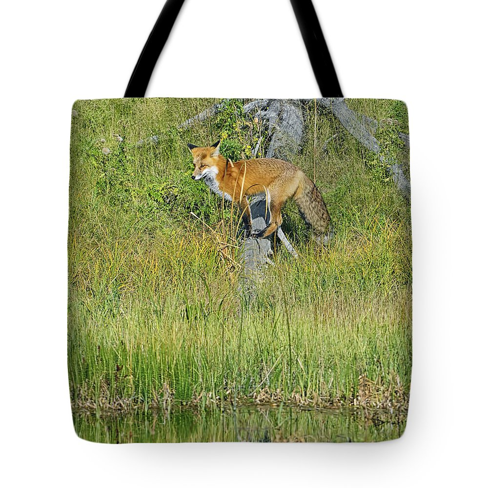 Red Fox Tote Bag featuring the photograph Waiting By The Water by Bill Dodsworth