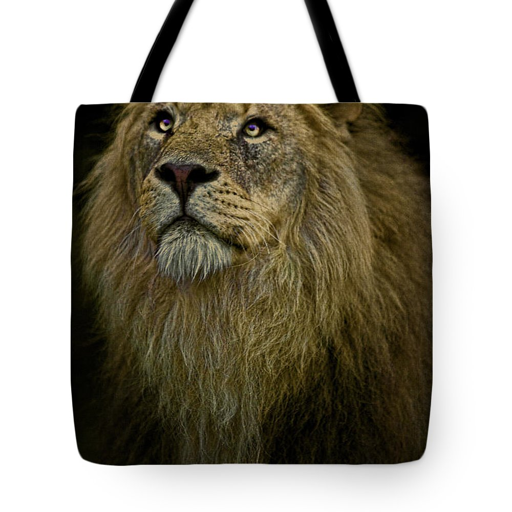 Lion Tote Bag featuring the photograph Waiting Expectantly by Chris Lord