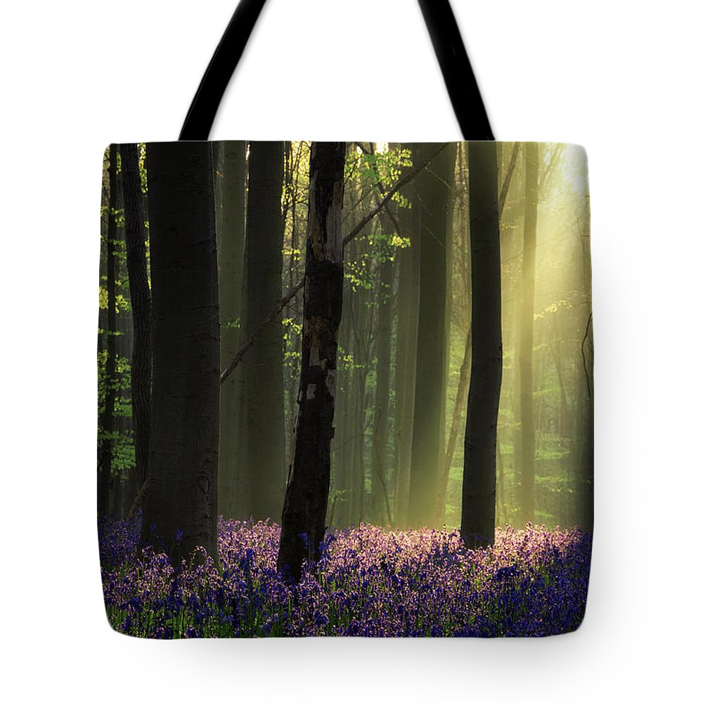 Sunrise Tote Bag featuring the photograph Waiting For Spring by Martin Podt