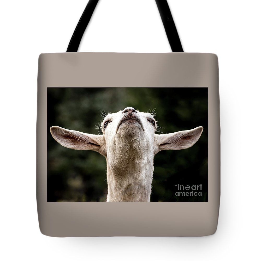 Colorado Springs Zoo Tote Bag featuring the photograph Waiting For The Rapture by Jennifer Mitchell