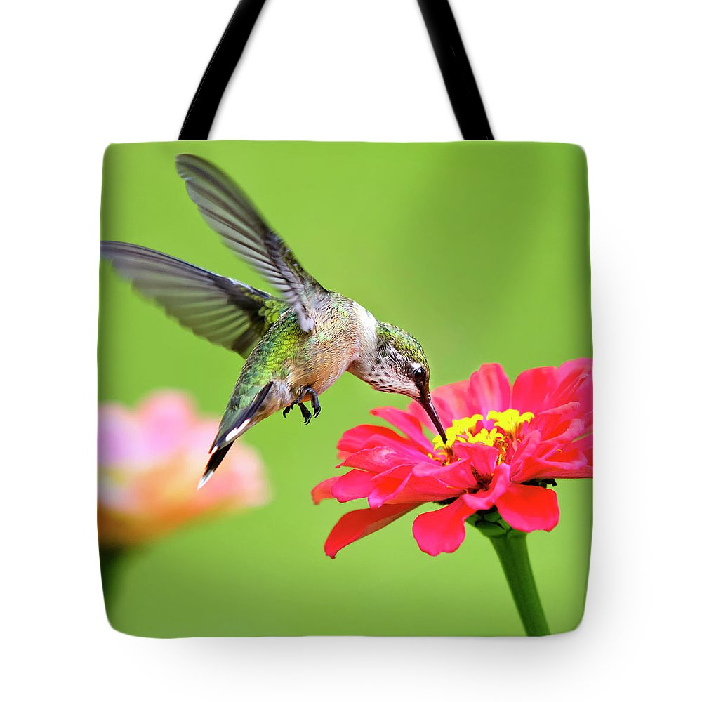 Hummingbird Tote Bag featuring the photograph Waiting In The Wings Hummingbird Square by Christina Rollo