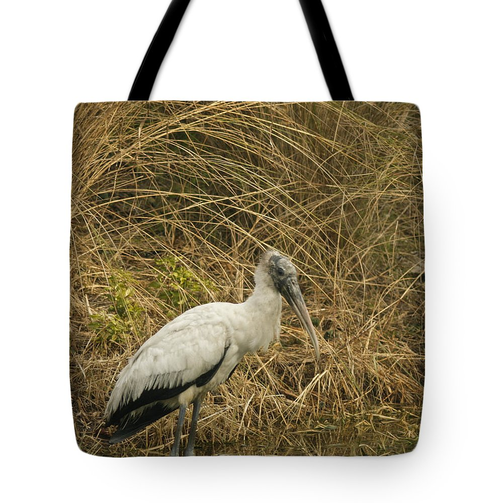 Bird Tote Bag featuring the photograph Waiting by Phill Doherty