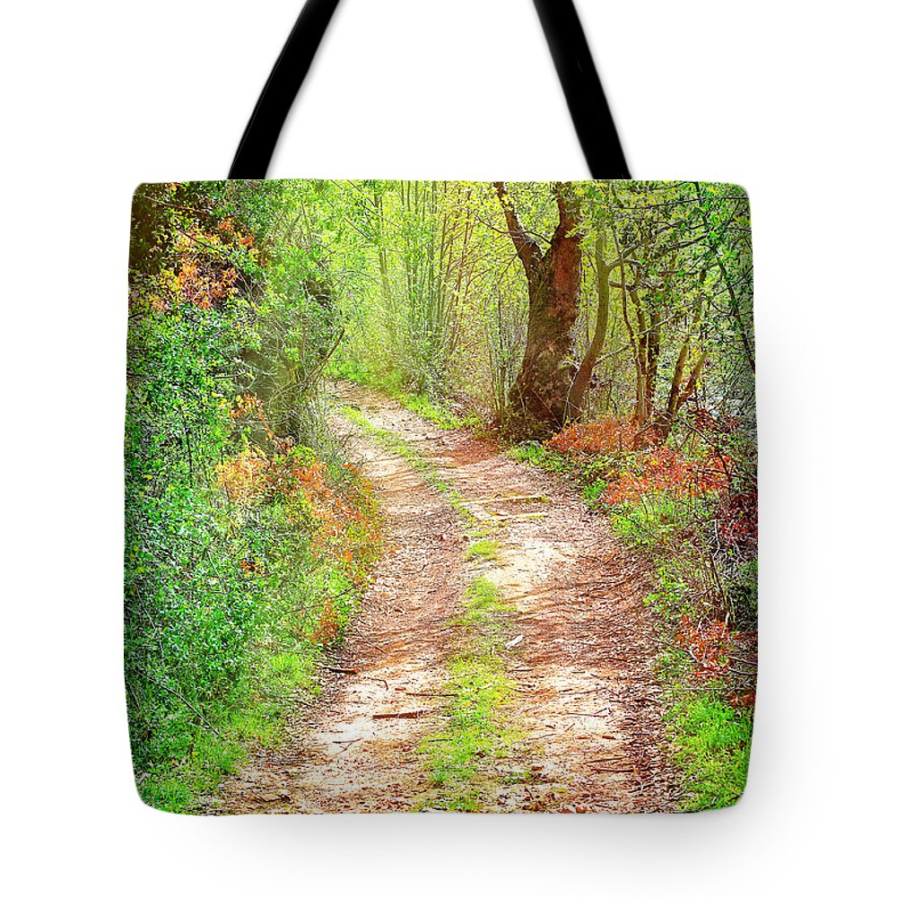 Beautiful Tote Bag featuring the photograph Walkway In Secluded Deciduous Forest by Anna Om