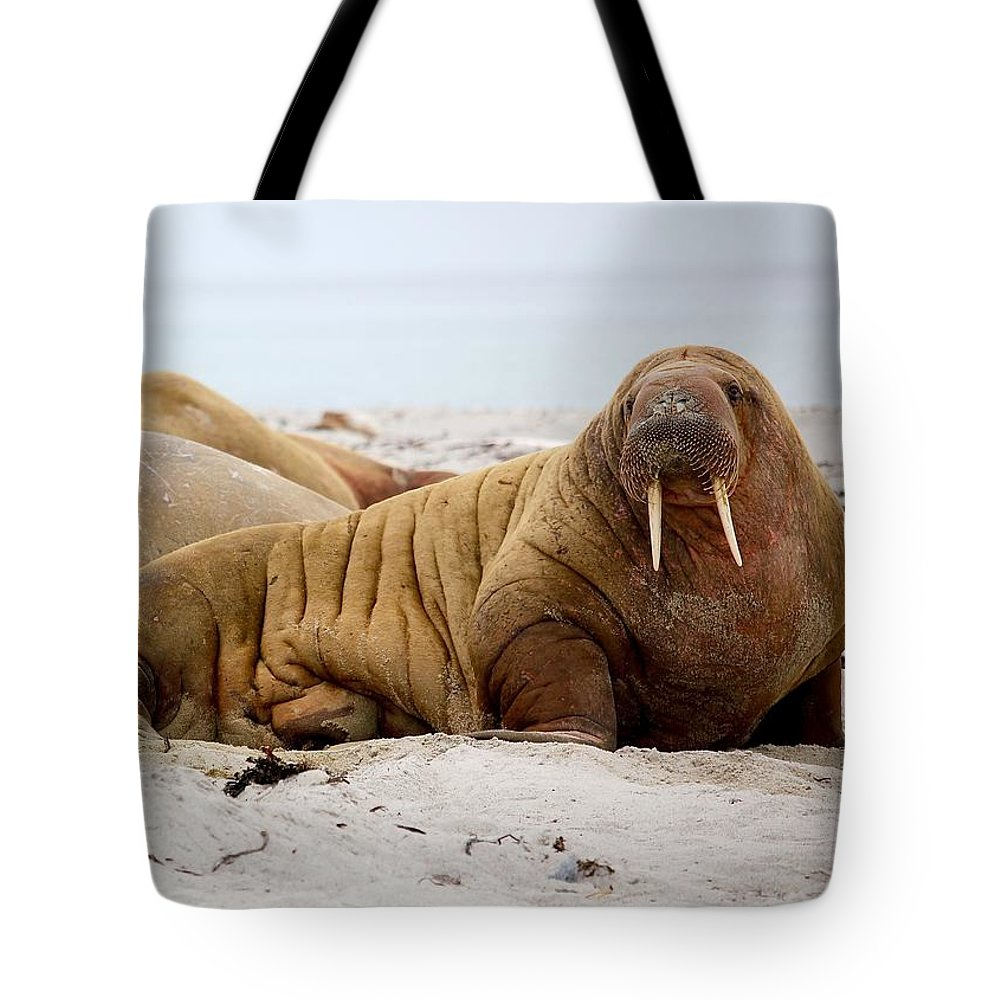 Walrus Tote Bag featuring the photograph Walrus Family by Happy Home Artistry