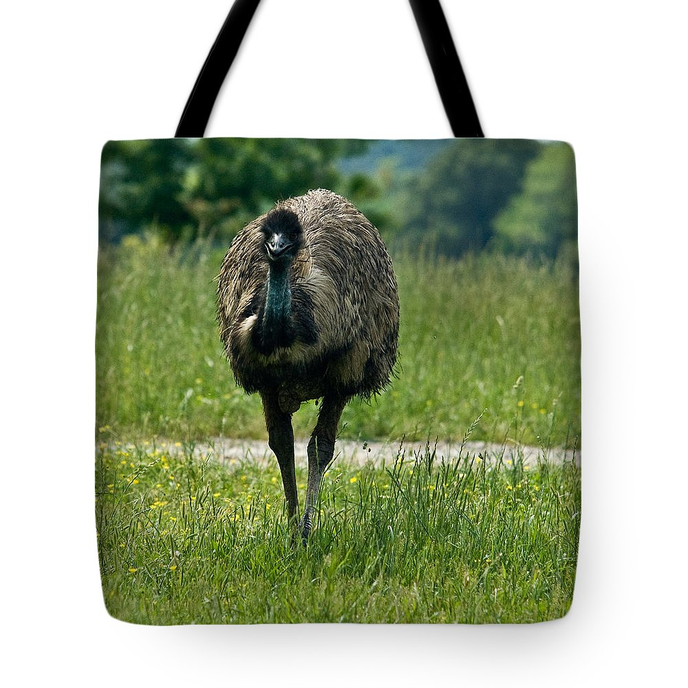 Wandering Tote Bag featuring the photograph Wanding Ostrich by Douglas Barnett